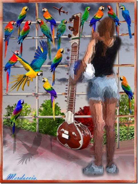 voliera dei pappagalli.