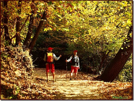 incontri nel bosco
