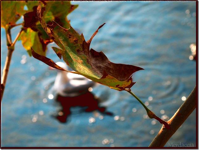 autunno (2)