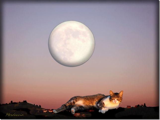 gatto pappone