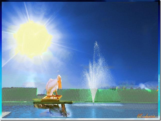 fontana con pellicano