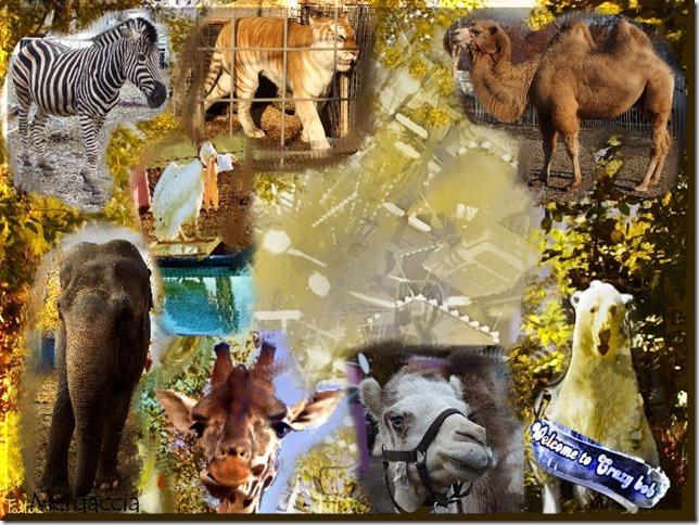 animali artisti