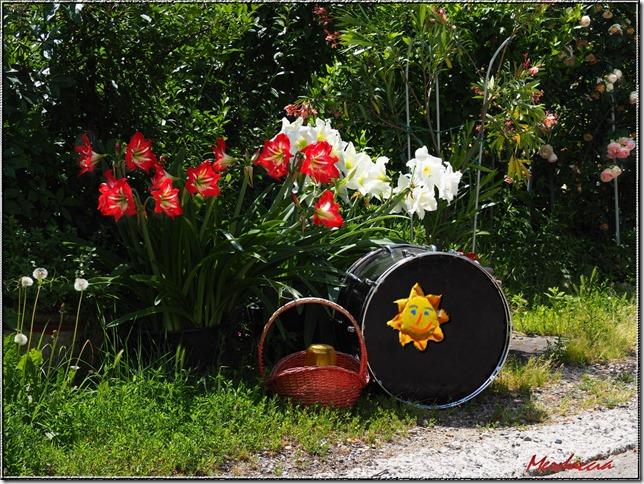 fiori con tamburo