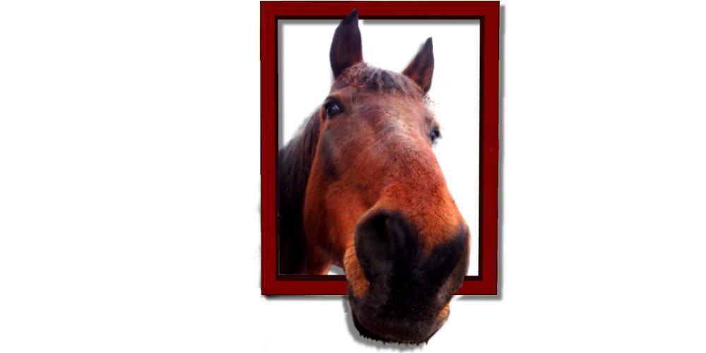 Campa cavallo.